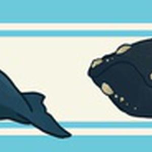 クジラたちマステ