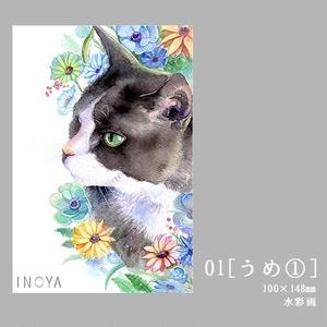 【ポストカード】猫