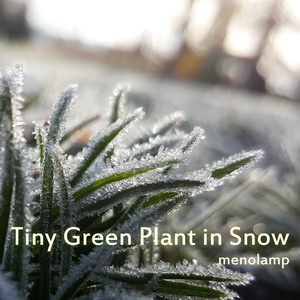 Tiny Green Plant in Snow
