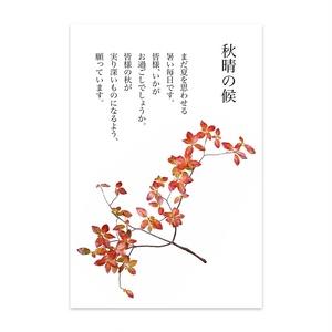 秋の紅葉ハガキ137ポストカード(10枚セット) - ヴァンヌーボVGスノーホワイト195kg