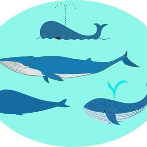 クジラのベクターイラスト素材