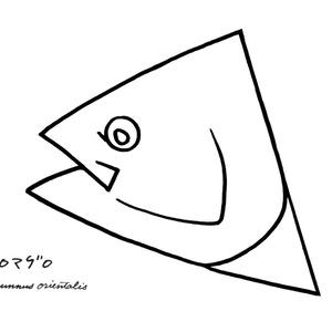 【UONOFreePics】マグロぬりえ