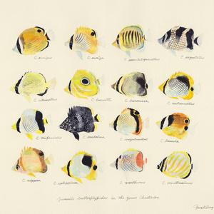 【UONOFreePics】チョウチョウウオの幼魚たち