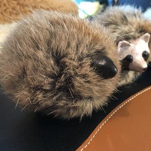 毛玉たぬき