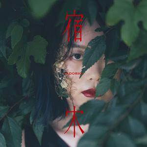 samayuzame 1stEP『宿木』