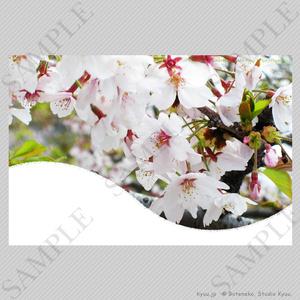 【春の挨拶状テンプレート】さくら(横)