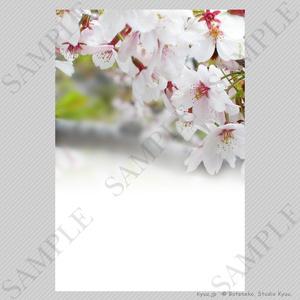 【春の挨拶状テンプレート】さくら(縦)