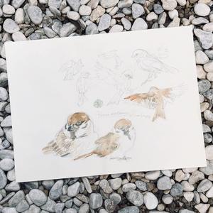 鳥ドローイング●スズメ