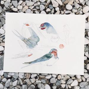 鳥ドローイング●ツバメ