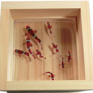 アクリルアート 3D金魚 「結」 【プレゼント付き】 還暦祝い 長寿 縁起物【こだわりと安心の純日本製】