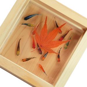 数量限定 癒し めだか アート 輝/もみじ 赤 紅葉 還暦 誕生日 結婚 プレゼント お正月 金魚 魚 生き物 動物