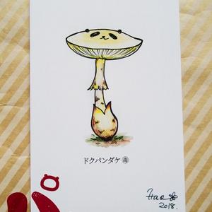 ポストカード『ドクパンダケ』