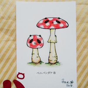 ポストカード『ベニパンダケ』