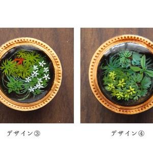 水中の植物の絵