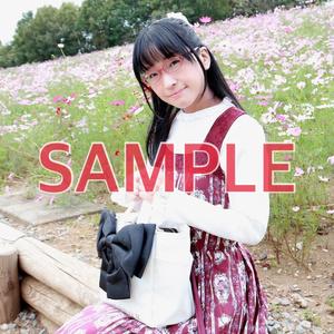 【☆ダウンロード写真】コスモス畑のじゅうななちゃん♪