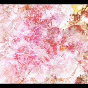 [映像素材] Bloom - 2020 spring