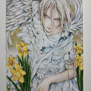 ポストカード 水仙の花