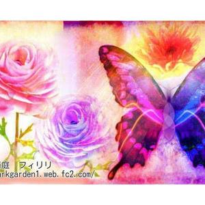 送料込 【写真1枚】 蝶とラナンキュラス