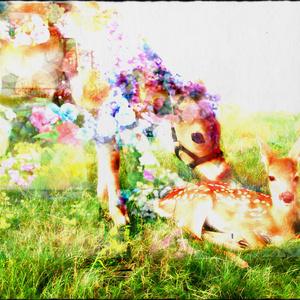 送料込 【写真1枚】 花冠のジャージー牛と小鹿