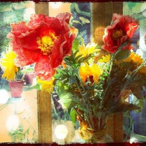 送料込 【写真1枚】ダリアの花