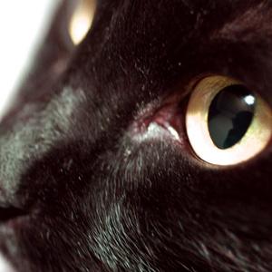【CoCシナリオ】猫の神様