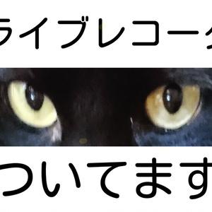 ネコノメ 見てますよステッカー 【全四種】