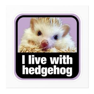 I live with hedgehog