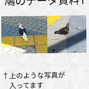 鳩のフリー資料