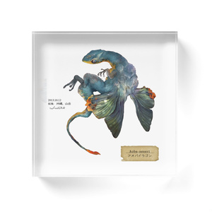 アオバドラゴンのアクリル標本