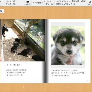 狼犬ポーズ集カーリー編