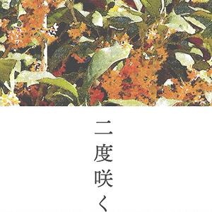 【くにちょぎ】ニ度咲く花