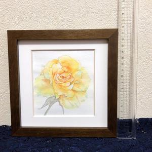 黄色い薔薇の水彩原画