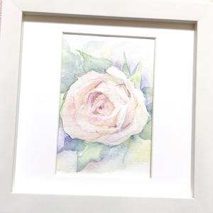 白い薔薇の水彩原画
