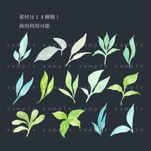 水彩葉っぱの素材集