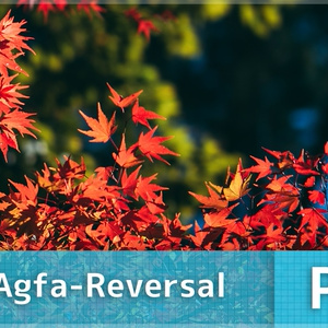 HertZ-Agfa-Reversal プリセットPRO版(Photoshop & Lightroom用)