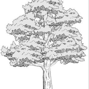 木ブラシセット