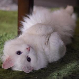 もふもふ白猫のマルチクリーナー