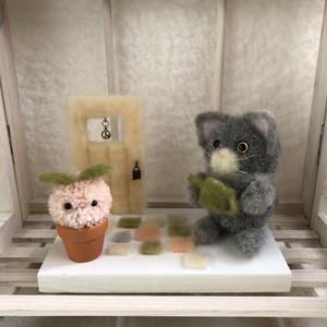 ぽんぽん猫と植物のお庭