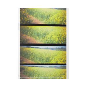 菜の花畑のクリアファイル