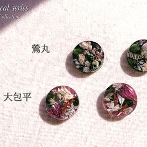 刀剣乱舞 botanical series