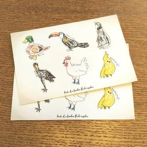 ポストカード【鳥類】