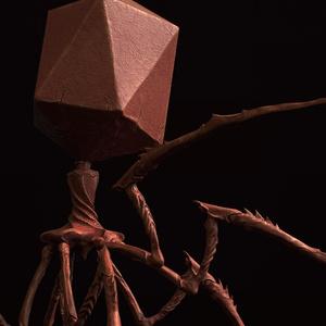 【3Dウイルス】バクテリオファージモデル【4タイプ】
