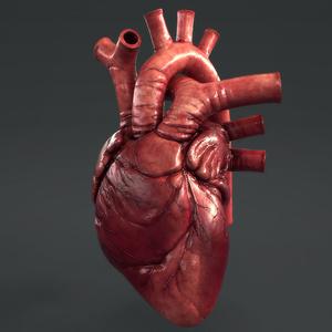 【3D素材】リアル心臓モデル