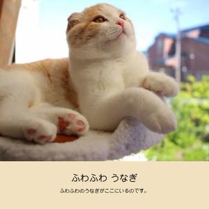 ふわふわうなぎ【写真集】