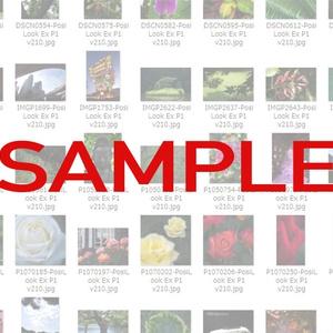 カメラプロファイル作例集
