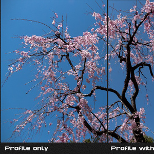 PosiLook Expert P1 Ver4.00a (for DxO ONE)