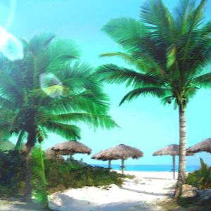 椰子の木とビーチ