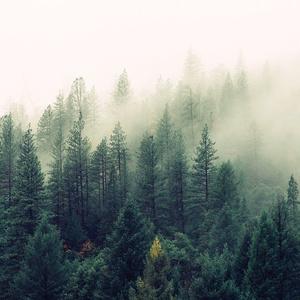 霧の立ち込める深い森