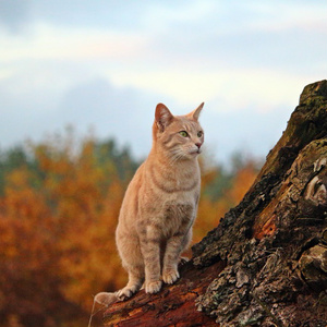 荒野の猫旅団