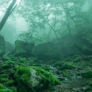 鬱蒼とした森の廃墟
